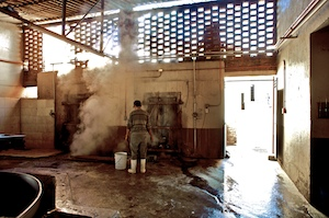 Blue agave pinas being steamed inside of the old-style Cascahuin Distillery in Tequila, Mexico.