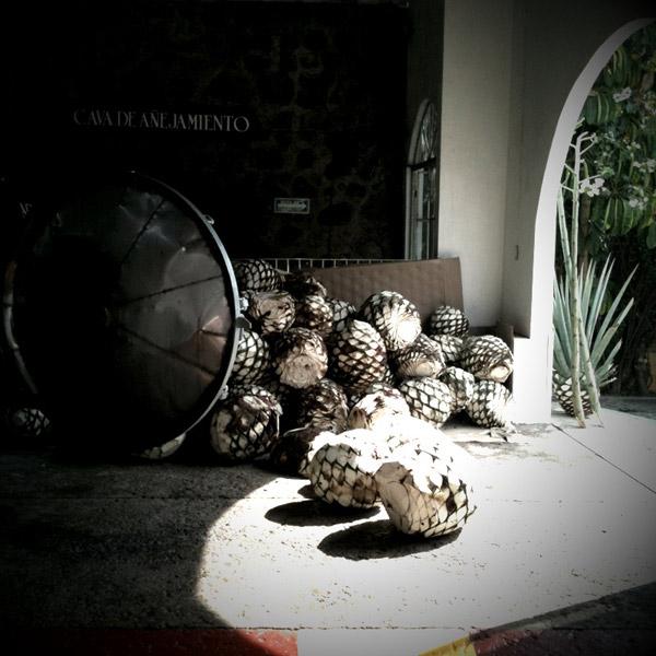 Piñas de agave que fueron cosechadas durante nuestra sesión de fotos, en el piso de la destilería, antes de ser horneadas en el horno.