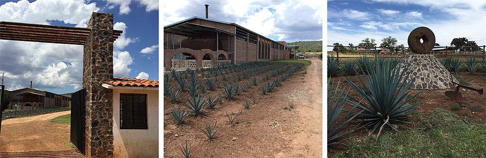 el-pandillo-tequila-distillery