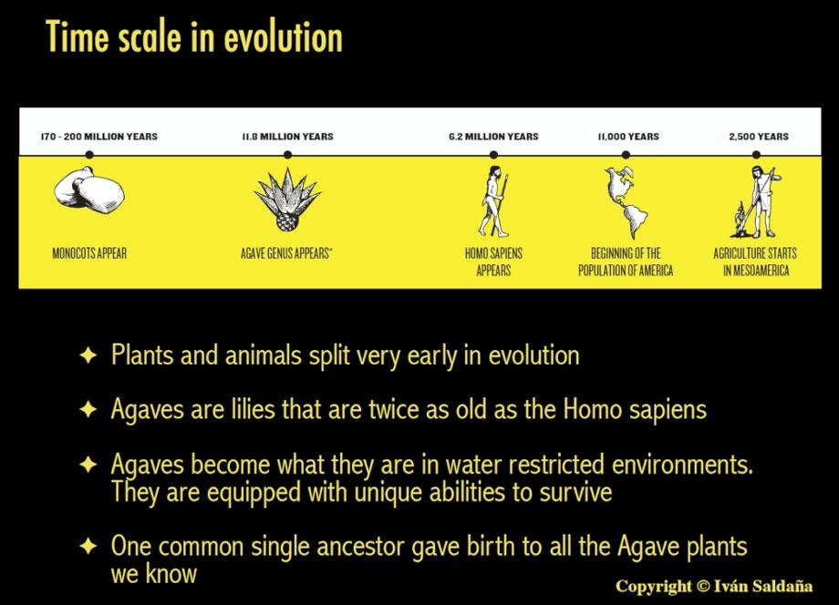 Escala de tiempo de evolución de agave